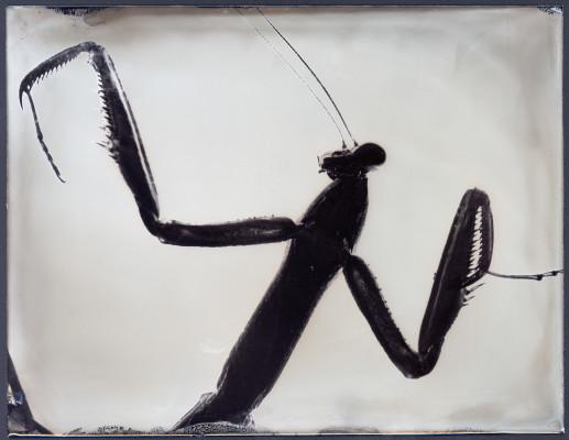 Buggy #29 tintype