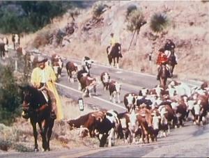 screenshot from Moving Stills