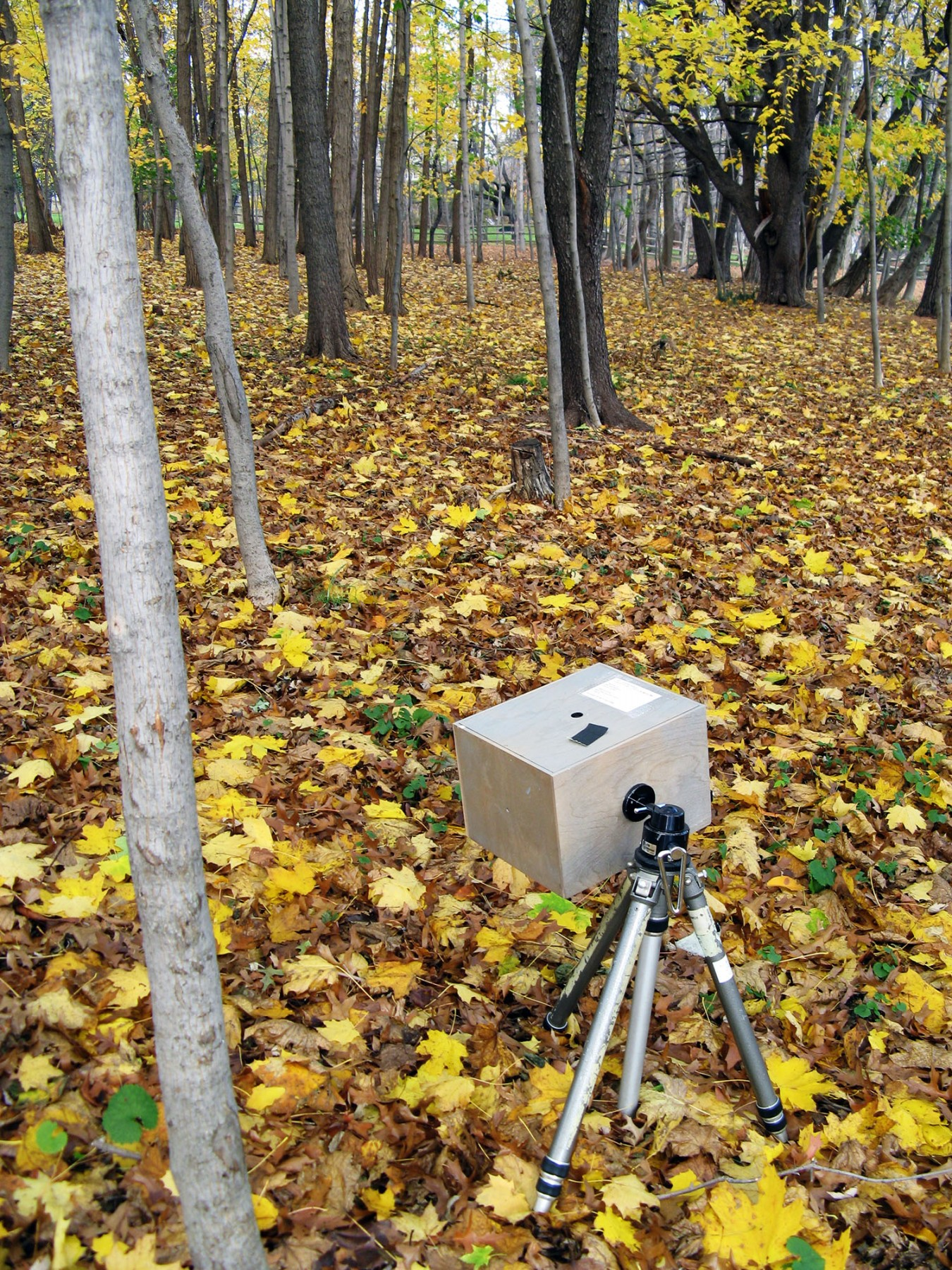 Wald pinhole camera in the woods